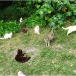 Herding the Smart Cats: IT Change Leadership