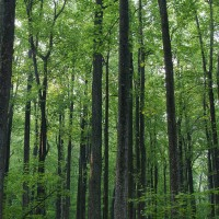 The Forest and the Trees: Managing Business Ecosystems